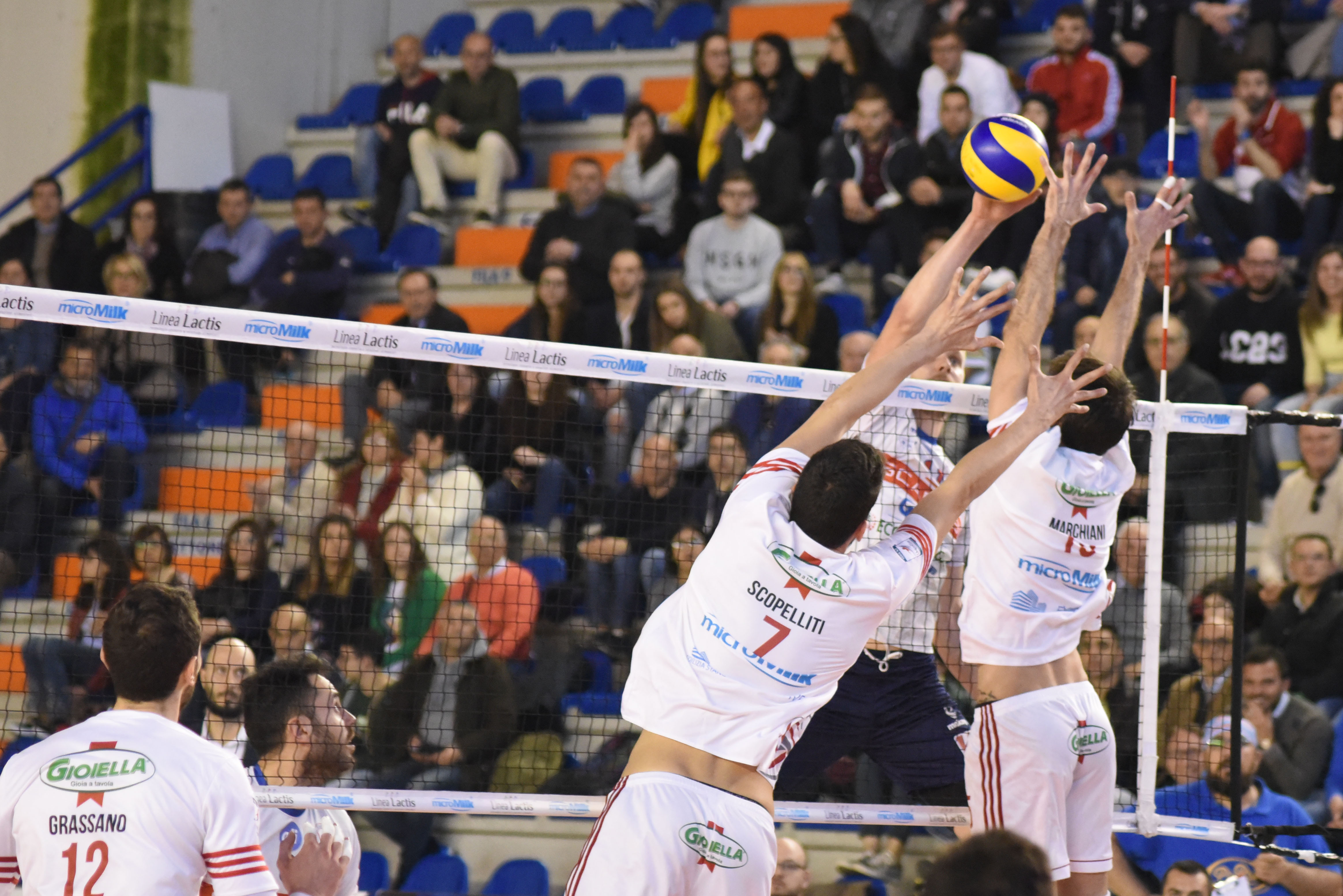 Ph. Daily Volley